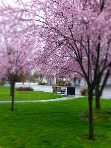 blurryplumtrees